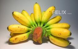 c464c-bananen_gluay_khai