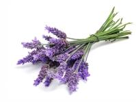 fee19-lavendel