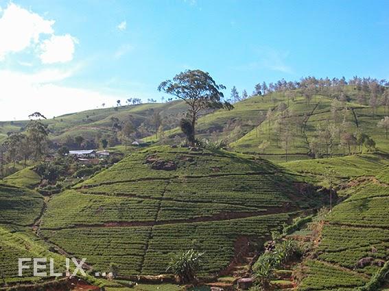 2b62f-srilanka_tee