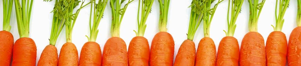 KarottenParade.jpg