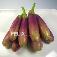 6b83a-auberginen_violett