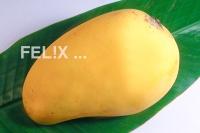 6a15f-mango