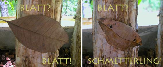 8eec7-blatt_oder_schmetterling