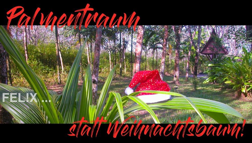 0e62c-oh_palmenbaum