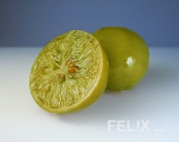 b6975-pickledlime