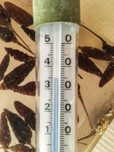Thermometer_35_Grad