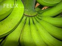 Bananen_gruen